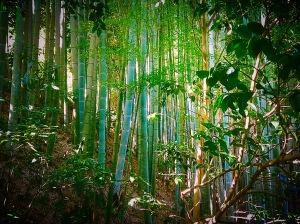 Daibutsu hike 2